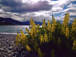 Top Ten Reasons Why Buying Land in Chilean Patagonia is a Smart Investment