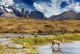 Bonos de carbono: una nueva oportunidad de negocios en Chile